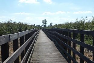 Unterwegs auf Holzstegen im Narew Nationalpark