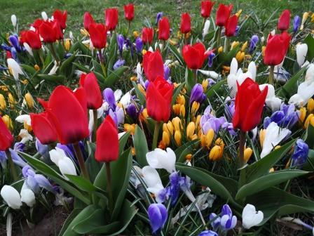 Wort des Monats März: Wiosna